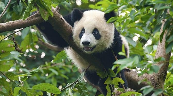 China_low-e_petrochemical_-_Panda.jpg